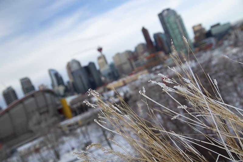 Downtown Calgary in Winter