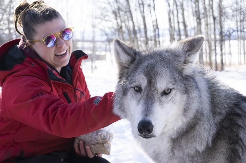 Yamnuska Wolfdog Sanctuary Alberta