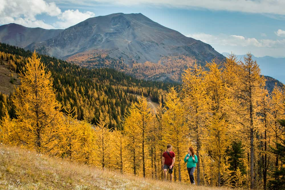 Larch Valley Hike