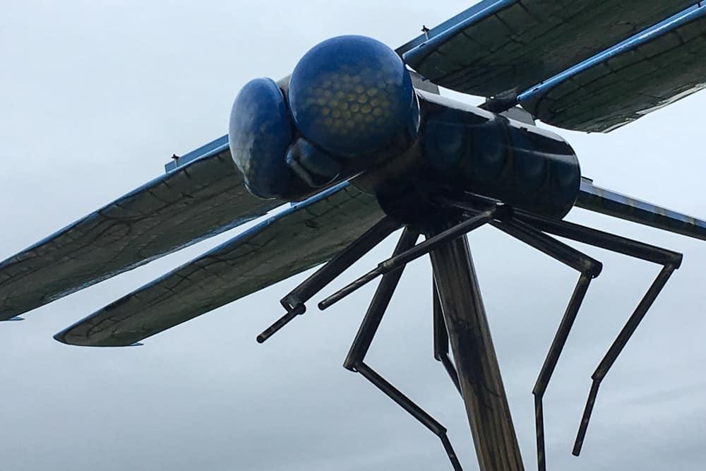 Giant Dragonfly in Wabamun, Alberta