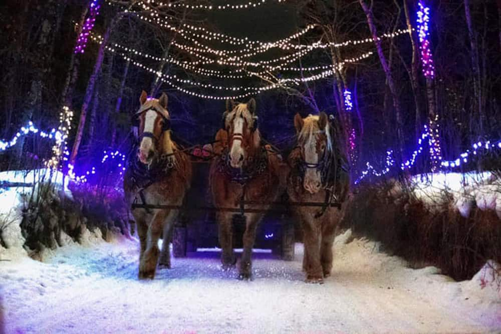 Heritage Ranch Winter Lights