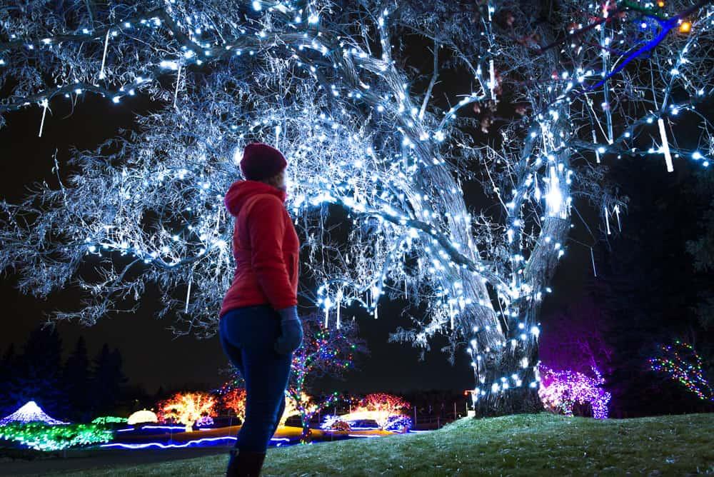Nikka Yuko Festival of Lights