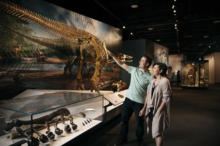 A dinosaur exhibit at the Royal Alberta Museum