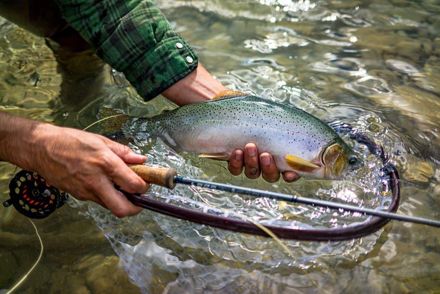 Catching Fish in Alberta