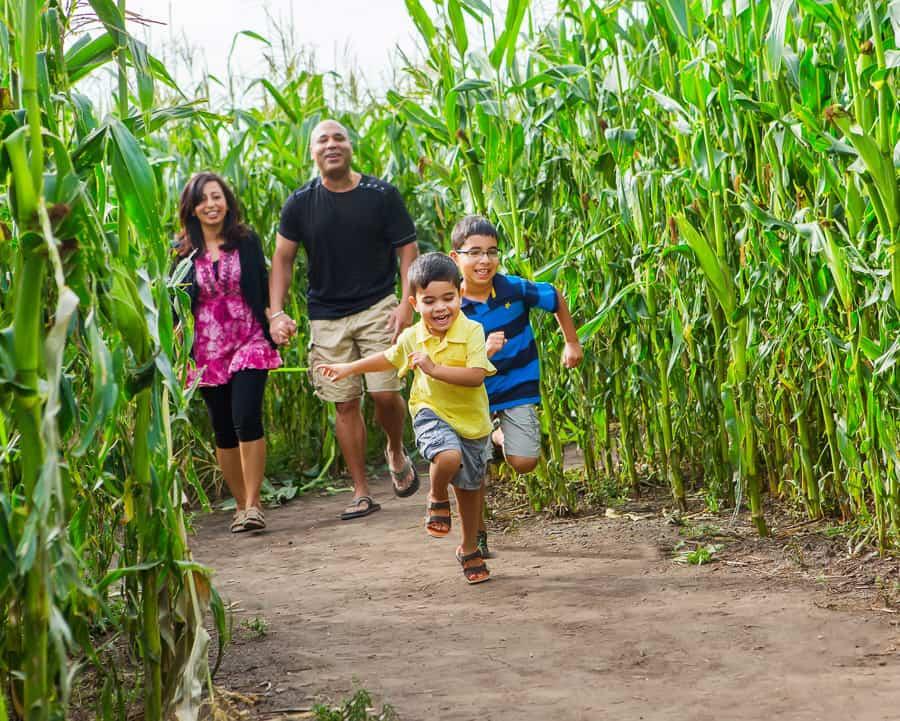 Corn Maze Kraay Family Farm